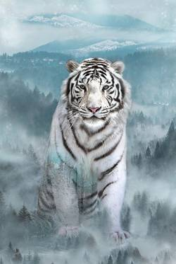 Hoffman Call of the Wild White Tiger Panel, Rapport ca. 72 cm