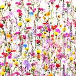 Hoffman Mystic Meadow Digitaldruck Blumenwiese bunt