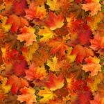Elizabeths Studio Multi Leaves, Herbstblätter bunt